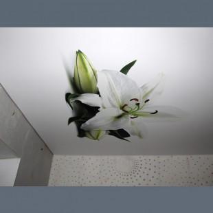 Натяжной потолок с фотопечатью на кухню  - 1 м.2